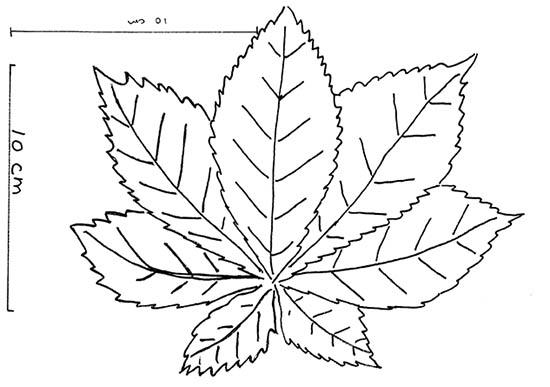 bladeskablon